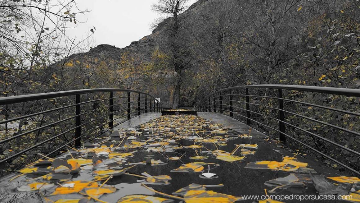 puente-hojas-cuenca