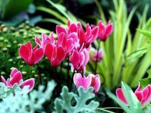 varias plantas al aire libre