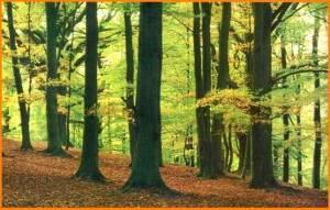 caracteristicas del reino vegetal