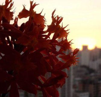 como cuidar de orquídeas (sergio oyama)