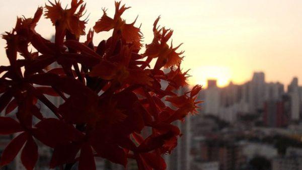 como cuidar de orquídeas (sergio oyama) como cuidar de orquídeas compradas do mercado