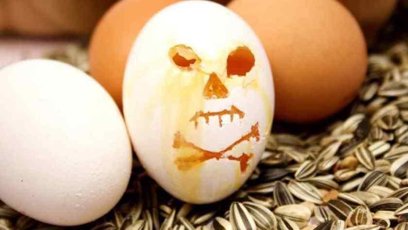 Quem tem Hemorroidas pode Comer Ovo