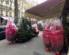 Paris, França, Natal, Árvore Coloridas - Foto Nathalia Molina @ComoViaja (2)