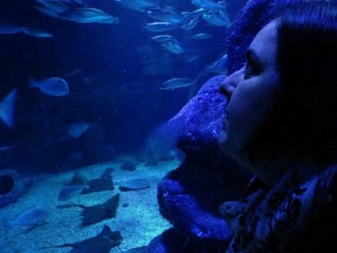 SeaLife AquaDom Berlim, Aquario Alemanha Viagem - Foto Nathalia Molina @ComoViaja (20) (1024x768)