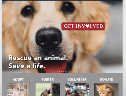 Downeast Veterinary Sanford