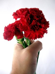 Carnations in hand
