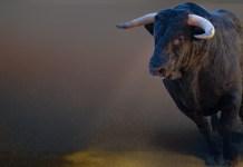 bull byk