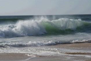 ccf fala fale wave elliott