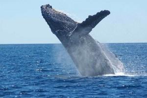 Bitcoin: Wieloryby zakumulowały 90 000 BTC przez 25 dni