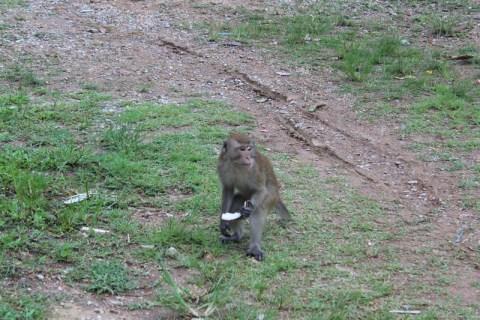 Macaco na área verde do nosso hotel em Railay