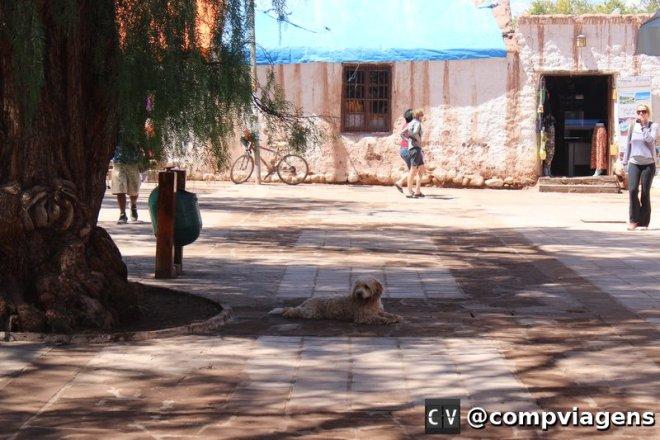 Praça Central. Pelas ruas de San Pedro há muitos cachorros soltos