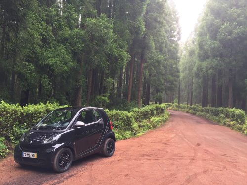 Car in the woods