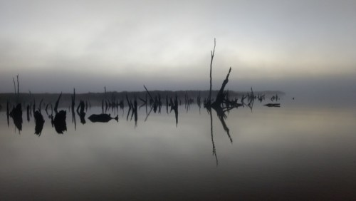 The sunken forest in the grey light of morning