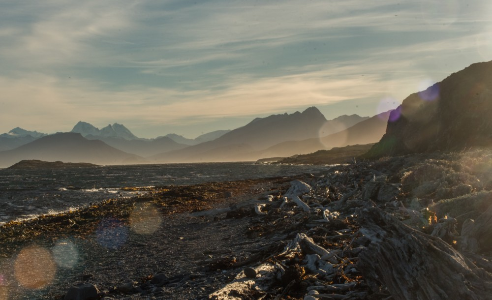 A driftwood covered beach in the Beagle Channel