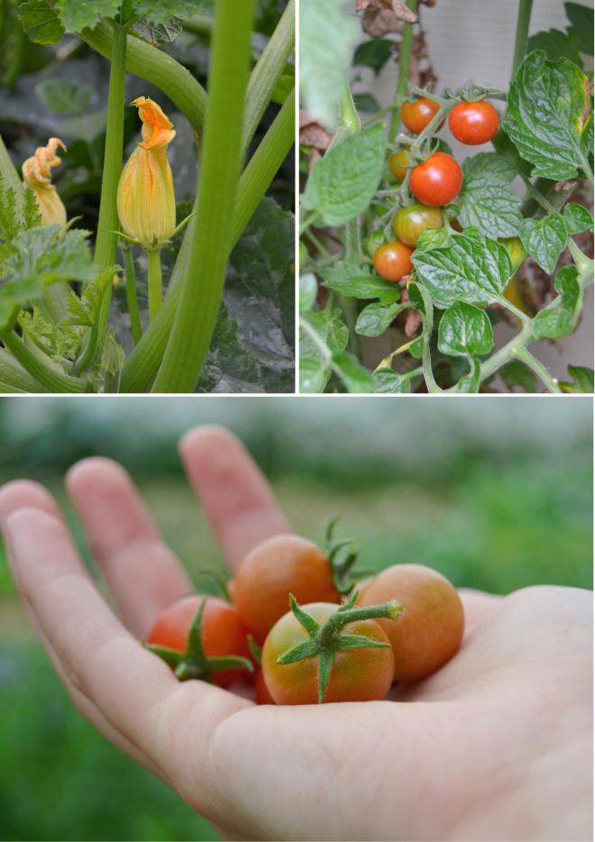 Courgette e tomate cherry