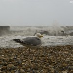Gulls, Beach and the Waves