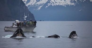 A Noruega mata baleias Fato