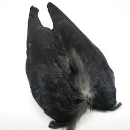 Cookshill Crow Wings (1 Pair)