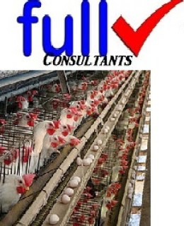 Poultry farming business free business plan template completefmc poultry farming business free business plan template flashek Choice Image