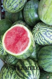 WATERMELON FARMING –  BUSINESS PLAN  AND FEASIBILITY STUDY  TEMPLATE