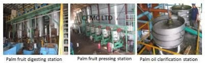 PALM OIL PRODUCTION FEASIBILITY STUDY