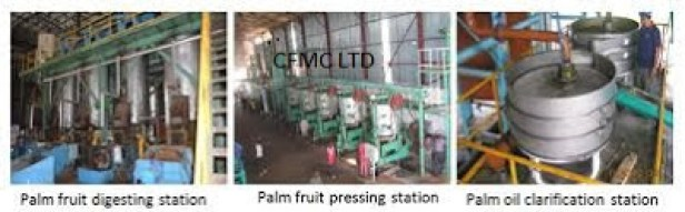 Palm Oil Exporting Company Business Plan in Nigeria