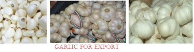 How to make millions from Garlic Export Business in Nigeria