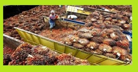 How & Where You Get Business information on Palm Oil Production in Nigeria