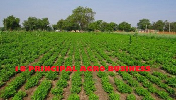 18 Principal Profitable Small-Scale Agriculture Business Ideas for Nigerians