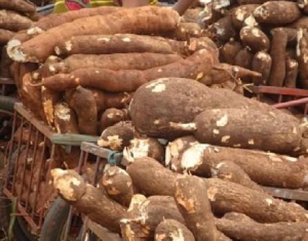 Cassava Processing Mill Business Plan Template