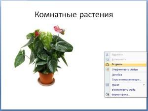 Как вставить в презентацию фото из интернета