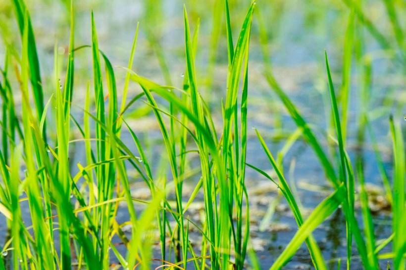 spring drops comporta