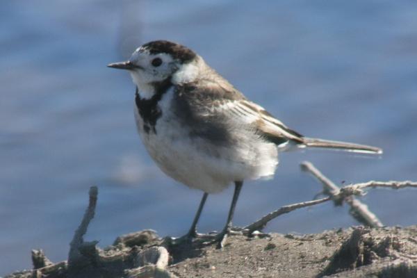 Comporta Birding