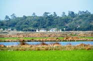 stroll through the rice fields comporta