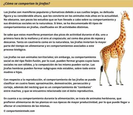Resumen sobre el comportamiento de las jirafas