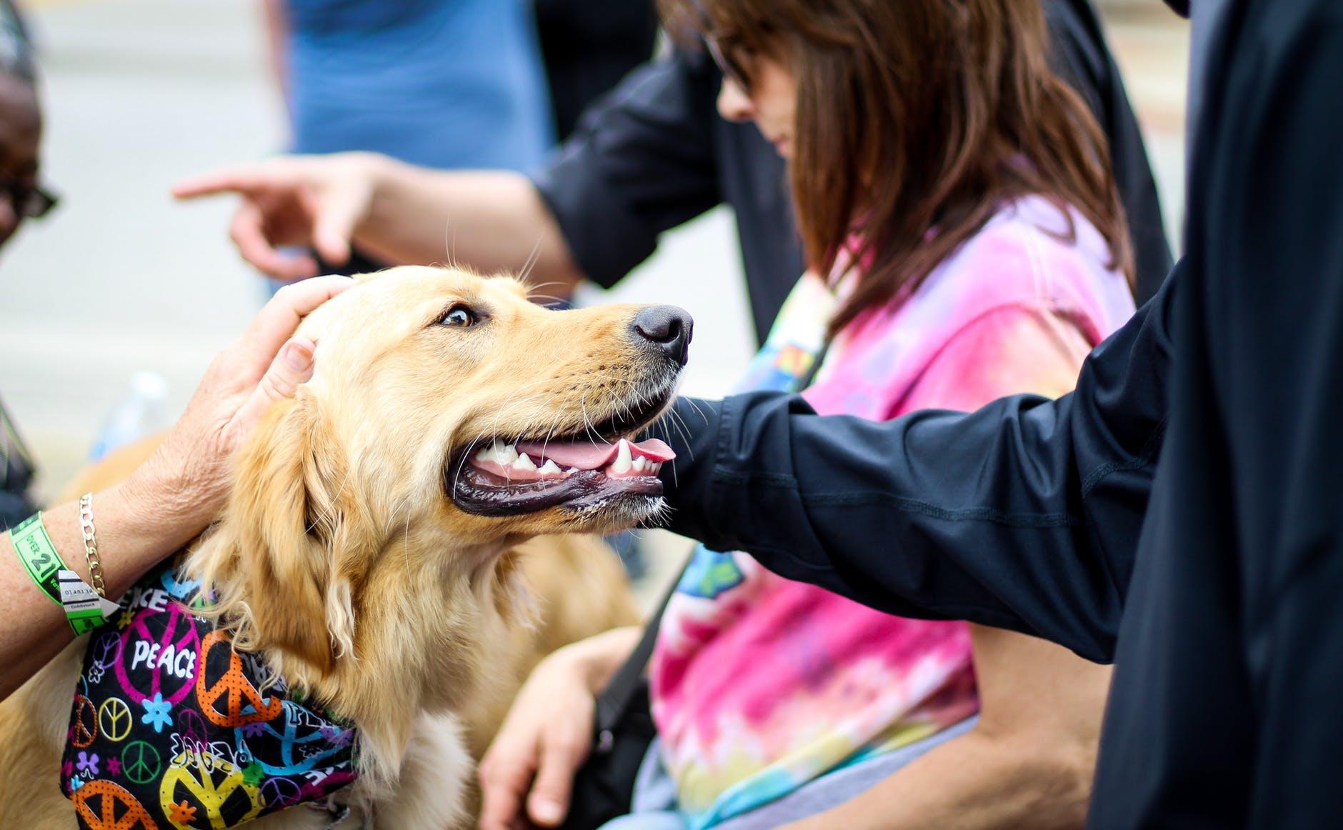 Un chien est caressé par une personne bienveillante qu'il regarde. Intergair avec un animal a de nombreux bienfaits.