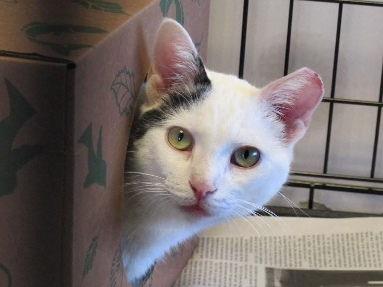 Un chat a trouvé refuge dans un carton. Une cachette dimimue nettement le stress en refuge.