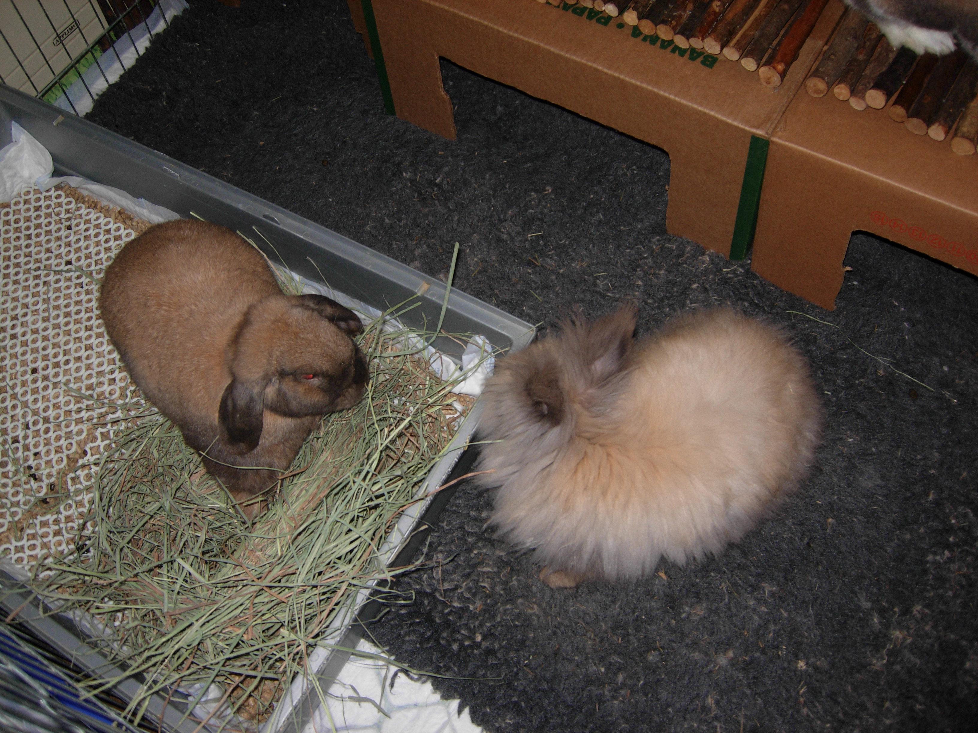 education du lapin a la proprete