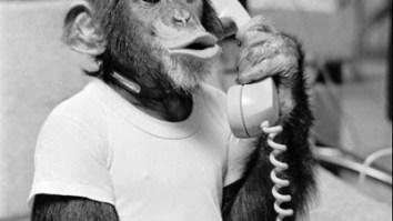 Algumas reflexões sobre a inserção de animais em nossa comunidade verbal 27