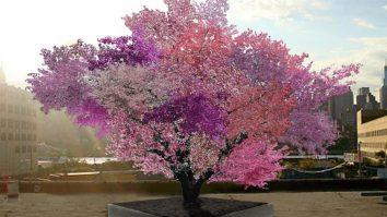 Frutos diferentes de uma mesma árvore: a ACT como proposta coerente com o Behaviorismo Radical 19