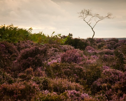 From the Peak District