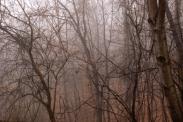 Misty Woodlands