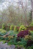 Misty woods and garden