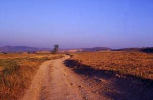 The Camino at Los Arcos