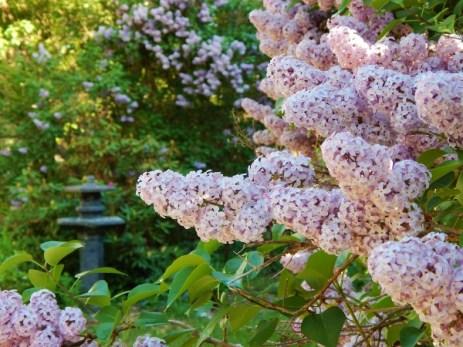 lilac enveloped b (600x450)