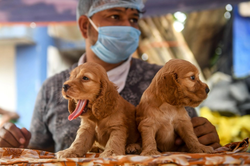 a man in a mask standing behind two puppies