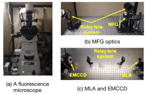 Snapshot 3D multifocal light field microscopy