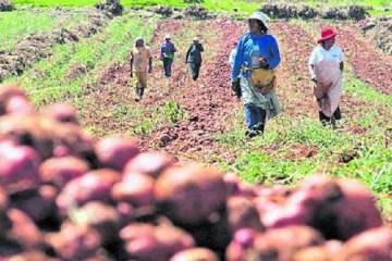 Buscarán que más del 30% de las compras estatales de alimentos provengan de la agricultura familiar