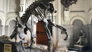 O que fazer em Buenos Aires - Museu Argentino de Ciências Naturais Bernardino Rivadavia