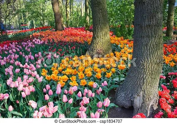 tulipes, Arbres, ressort - csp1834707